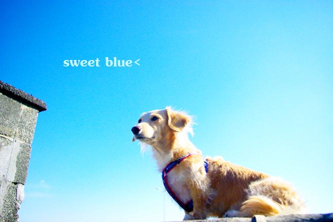 .sweet-blue.jpg